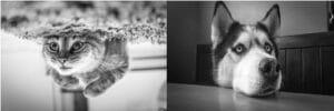 Nikon D7200 portrait settings - black and white