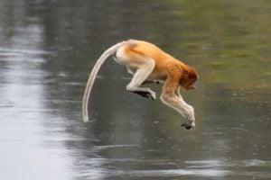 Canon EOS R wildlife photography autofocus
