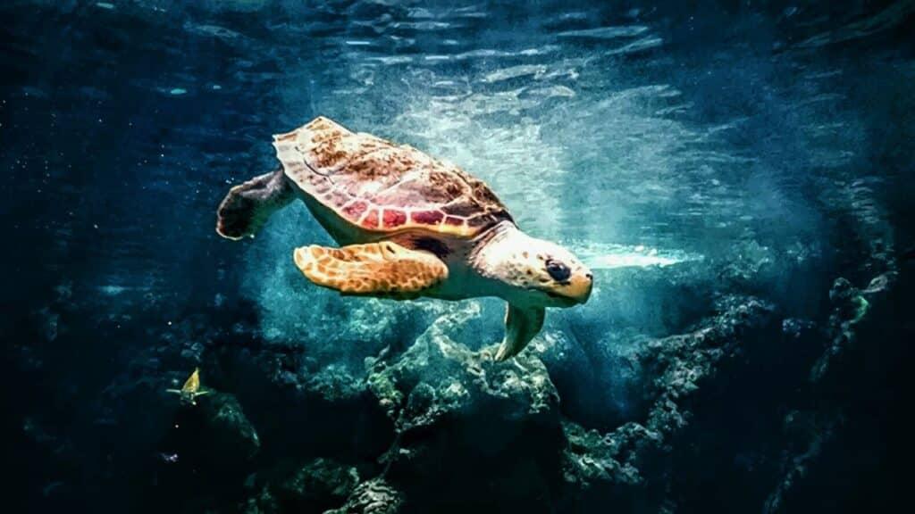 Ocean Photography Award 2021